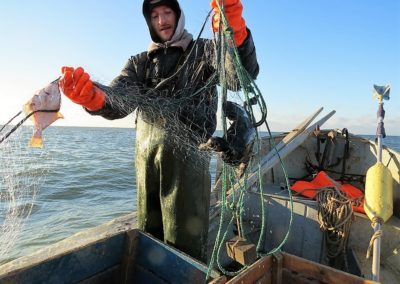 Untangling the net: tackling bird bycatch in Baltic gillnet fisheries